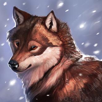 Фото Волк под падающим снегом, by Noctualis