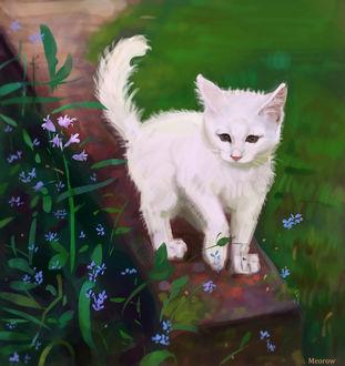 Фото Белый котенок, by Meorow