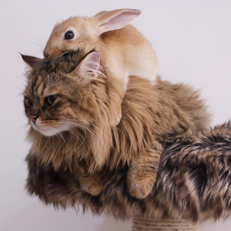 красивой фотографии кошки кроликов макияж