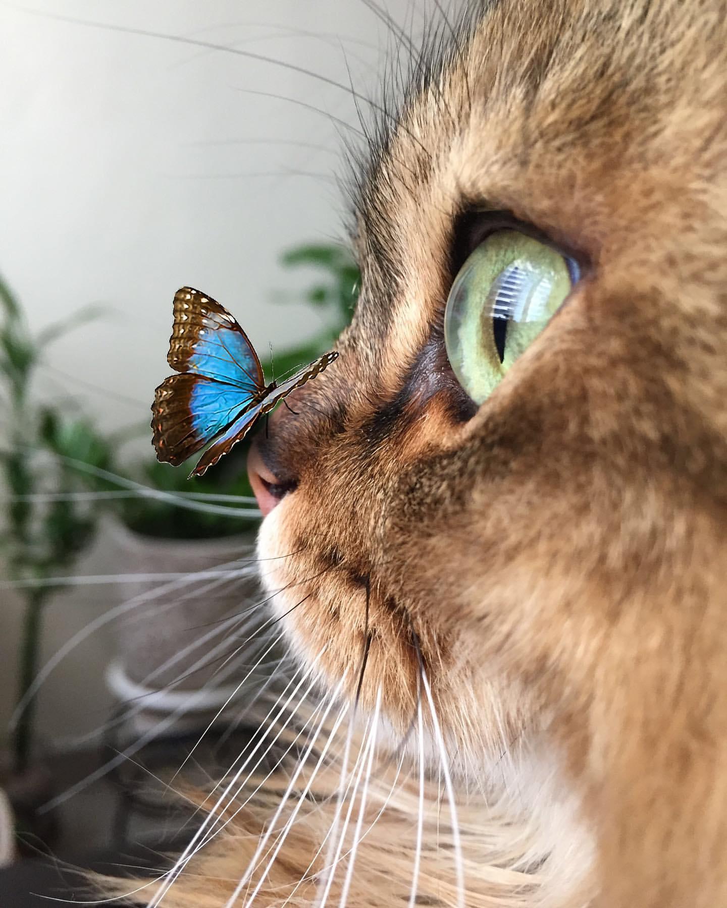 Кошка с бабочкой на носу картинка