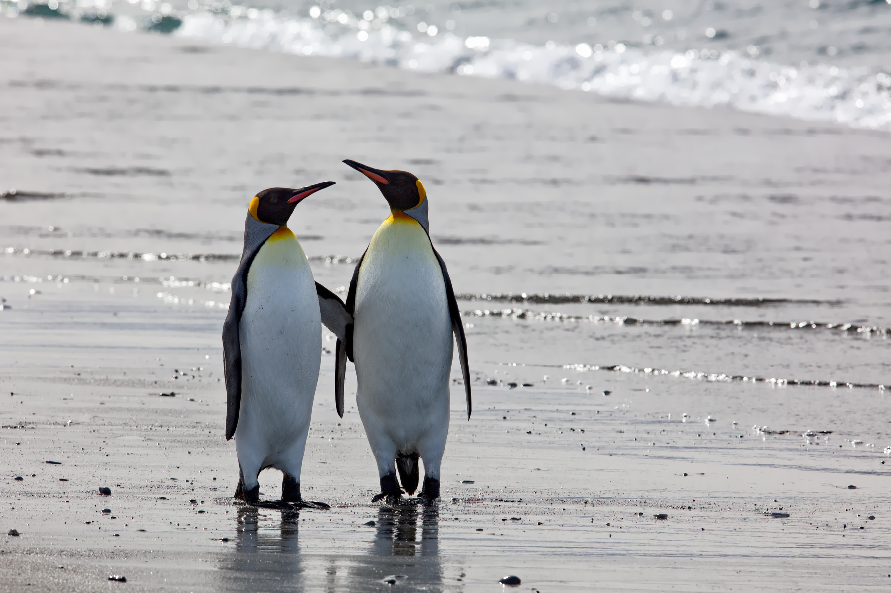меня очень картинка двух пингвинов слишком довольна