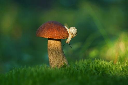 Фото Улитка на грибе, фотограф Александр Гвоздь