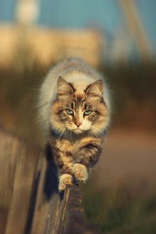 Фото Кошка на заборе, by Анна Бойцова