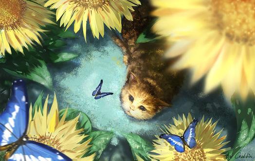 Фото Полосатый котенок смотрит на голубых бабочек на подсолнухах, by Mr. Goblin