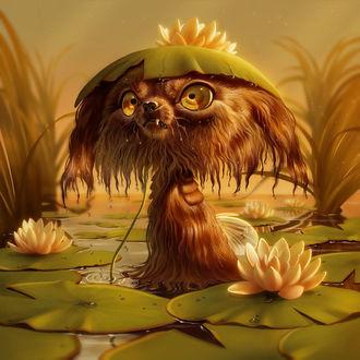 Фото Мокрая зверюшка с кувшинкой на мордочке в пруду, by Pixxus