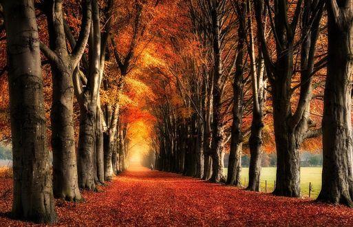 Фото Дорога усыпана осенней листвой, by efabo