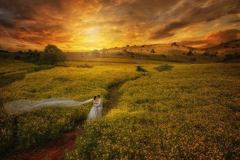 Фото Жених с невестой стоят на тропинке в цветущем поле на закате, фотограф Lao Zhong