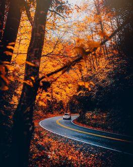 Фото Авто едит по дороге, по обочинам которой растут осенние деревья, фотограф Mike Poggioli