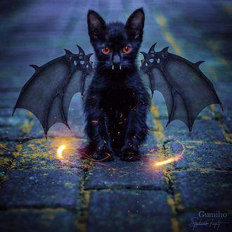 Фото Черный котенок-вампир сидит на мостовой, by sphantasy_art