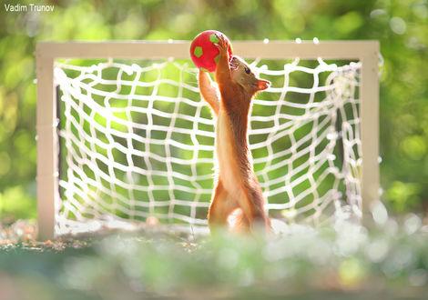 Фото Белка-спортсмен стоит на задних лапках, держа в передних мяч. Фотограф Вадим Трунов