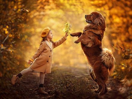 Фото Девочка и собака на тропинке в осеннем парке, фотограф Елена Михайлова