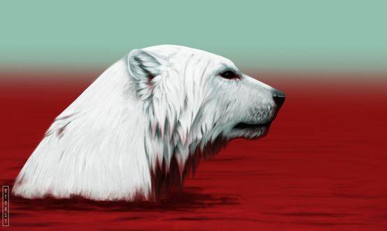 Фото Белый медведь в красном море, by 8TOAST