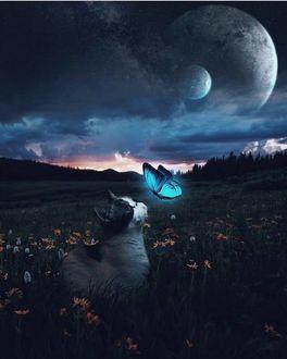 Фото Кошка сидит на траве и смотрит на бабочку