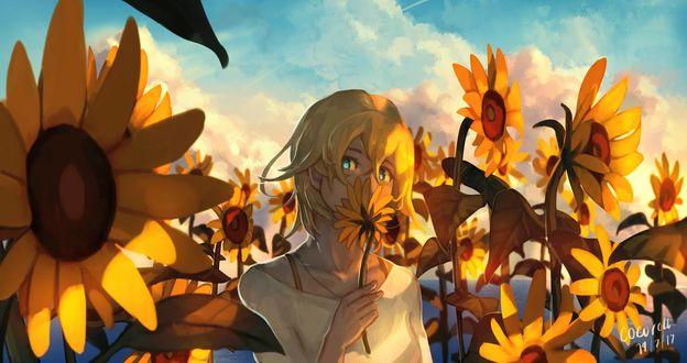 Фото Девушка с подсолнухом стоит среди цветов, by Cocoroll