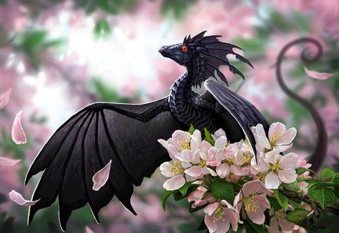 Фото Маленький черный дракон на цветущей ветке сакуры, by jaxxblackfox