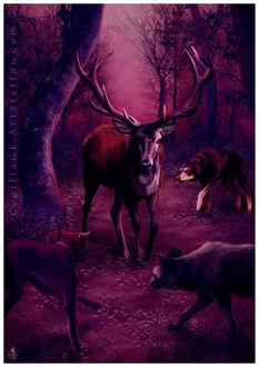 Фото Олень в лесу в окружении волка, шакала и собаки, by Cecilia G. F