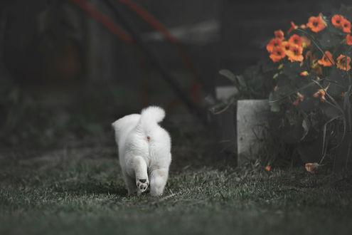 Фото Собакчка идет по земле. Фотограф Tsogoeva Erika