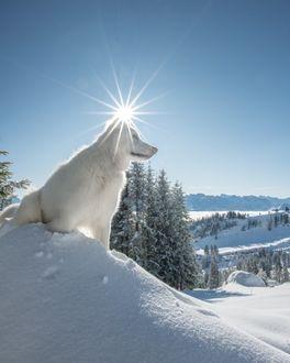 Фото Собака сидит на снегу на фоне неба с солнцем