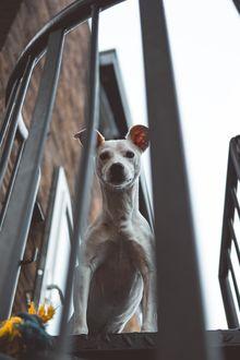Фото Собака за ограждением, by Marc Kleen