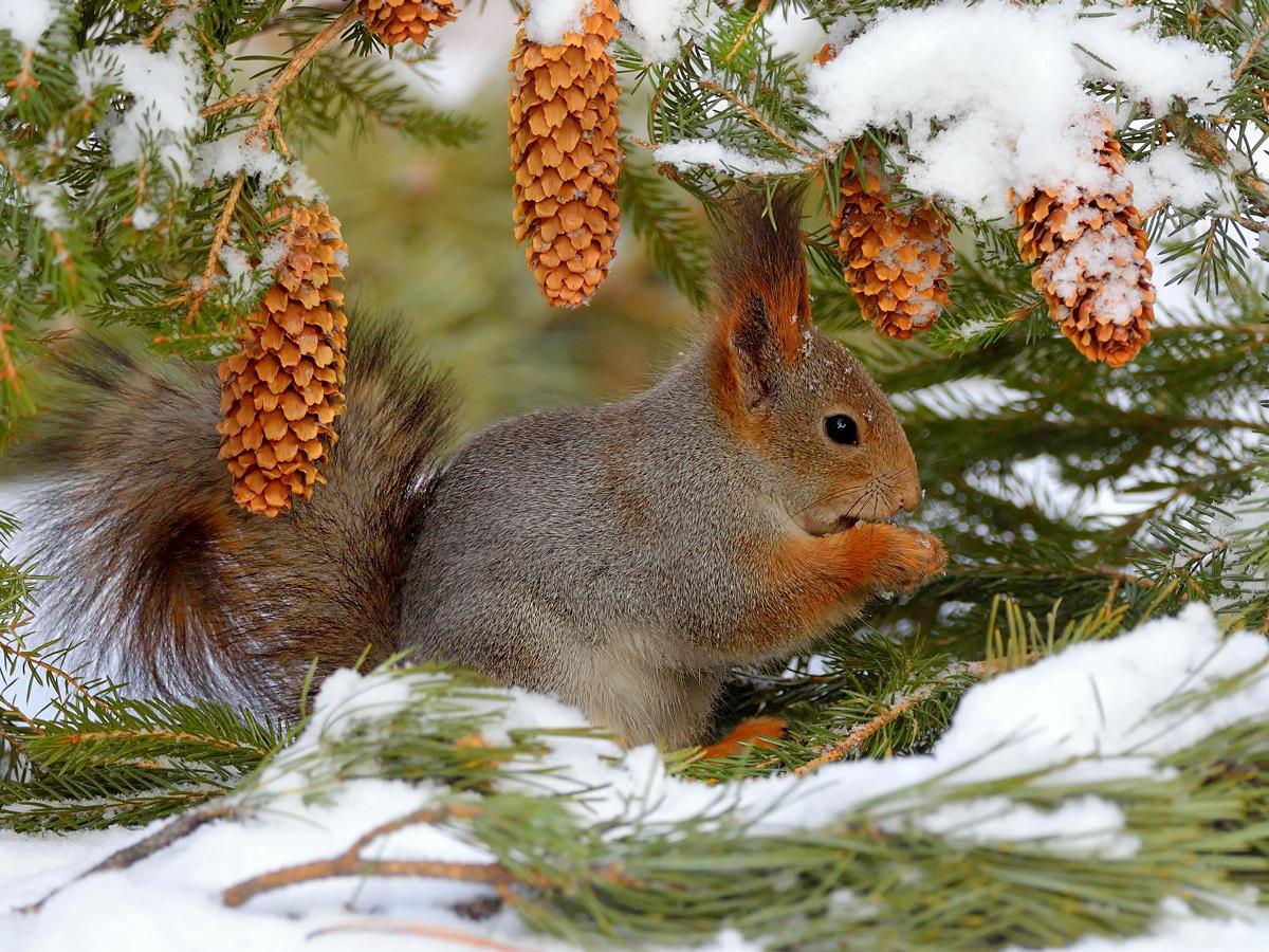 коллекциях картинки животных в лесу зимой специальность называлась