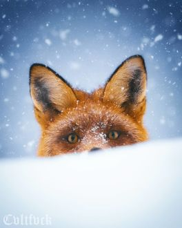 Лиса под падающим снегом, by cvltfvck