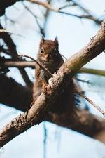 Фото Белка сидит на ветке дерева, by Erik Mclean