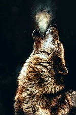 Фото Воющий волк на темном фоне