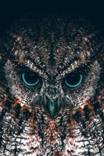 Фото Портрет совы с сине - черными глазами