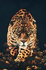 Фото Леопард на темном фоне