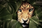 Фото Леопард за зеленой листвой