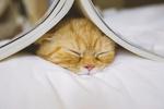 Фото Рыжий кот спит под книжкой, раскрытой домиком на его головой