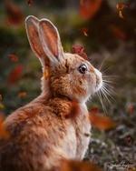 Фото Заяц под осенним листопадом, by sphantasy_art