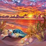 Фото Черепашка на берегу у море, by catdragon4