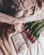 Фото На открытой книге лежат очки и красные тюльпаны и голубоглазая кошка на постели, by tv_neatly_