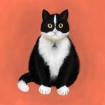 Фото Желтоглазый черно-белый кот, by Juoruru