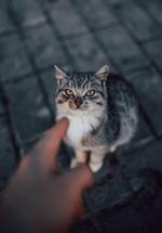 Фото Рука показывает на кошку, автор Vadim Sadovski