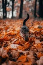 Фото Кошка в осенней листве, автор Vadim Sadovski