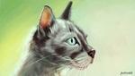 Фото Голубоглазая серая кошка, by petro66