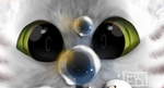 Фото Зеленоглазый белый кот смотрит на пузырь, by EmberBlight