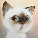 Фото Милый голубоглазый котик