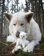 Фото Белый котенок рядом с собакой, by Snowflake. thekitten