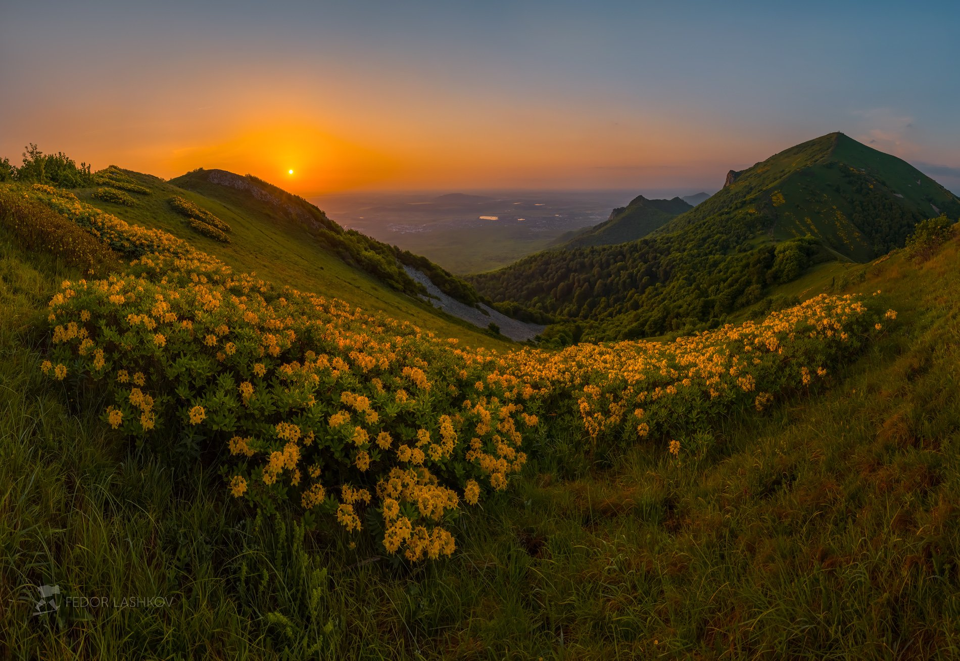 Фото Золотые цветы - рододендроны на склонах гор Бештау и Малый Тау весенним рассветом, Ставрополье, фотограф Лашков Федор