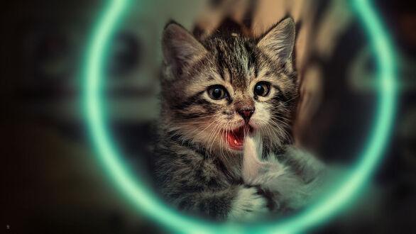 Фото Милый серый в полоску котенок, фотограф Fouad Vatanzadeh (© lRB02), добавлено: 10.09.2021 22:18