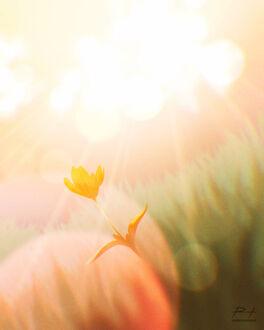 Фото Желтые цветы в траве, by ReedDrawsOnDA (© chucha), добавлено: 11.09.2021 08:05