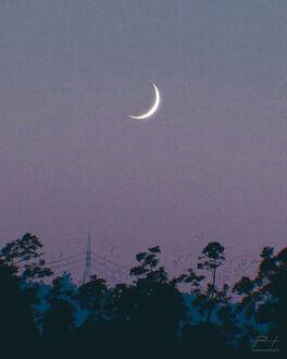 Фото Полумесяц в небе над деревьями, by ReedDrawsOnDA (© chucha), добавлено: 11.09.2021 08:06