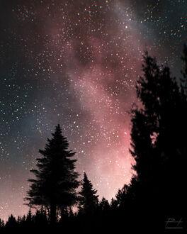 Фото Ели на фоне ночного неба, by ReedDrawsOnDA (© chucha), добавлено: 11.09.2021 08:14