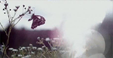 Анимация В руке девушки бабочка, на плече и на цветке