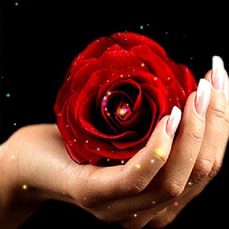 Анимация Сверкающая роза в руке (© zmeiy), добавлено: 21.02.2015 00:02