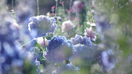 Анимация Цветы раскачиваются на ветру (© Krista Zarubin), добавлено: 22.02.2015 14:06