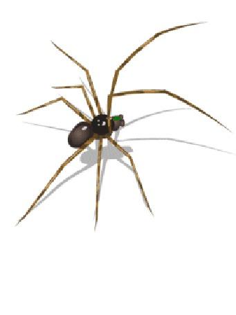 Анимация Быстро бегущий паук